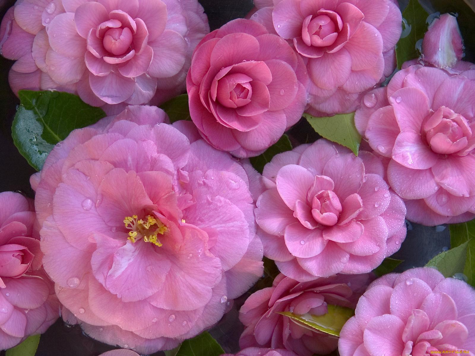 скачать картинки цветков